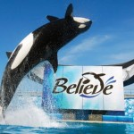 Sea World Believe_main